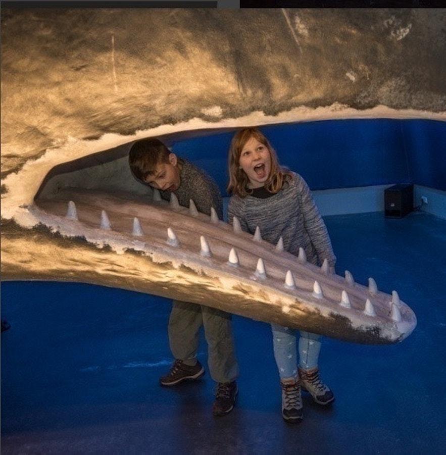 Muzeum wielorybów