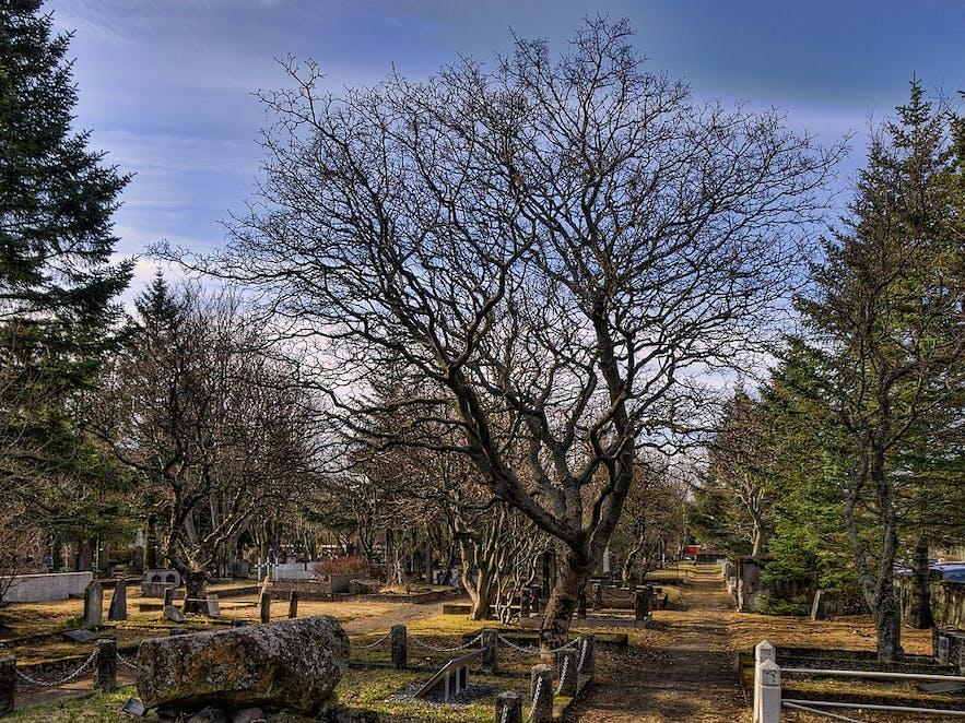Cmentarz Hólavallagarður w jesienne popołudnie.