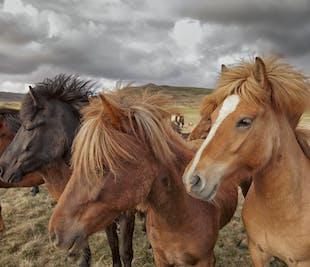 Reykjavik Horse Riding Tour