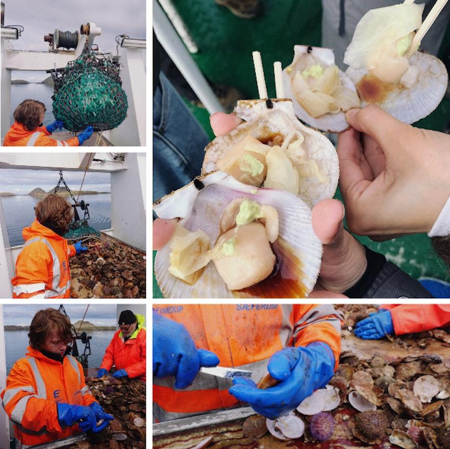 在冰岛西部斯奈山半岛的斯蒂基斯霍尔米小镇参加维京寿司船游,吃新鲜海产