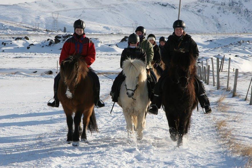 흰 눈 위에서 진행 중인 아이슬란드 토종말 승마 투어