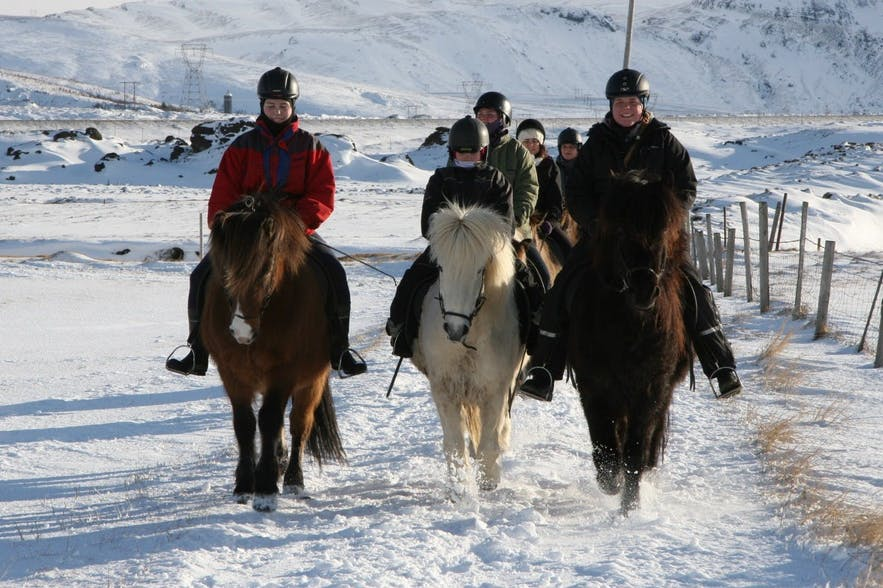 Riding Icelandic horses through the snow