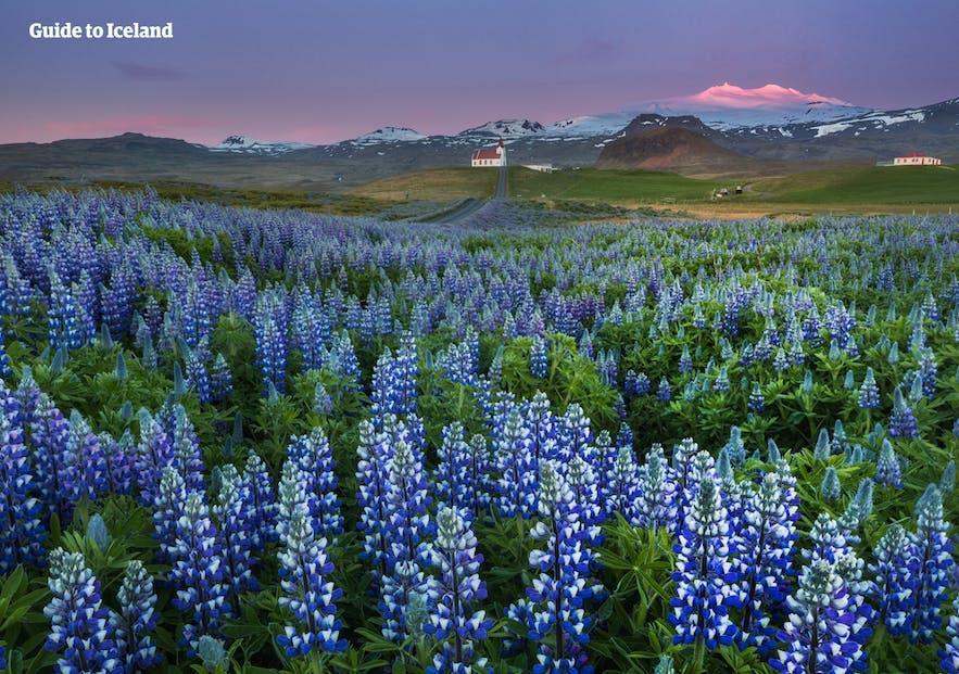 Am besten packt man für einen Islandtrip im Mai alle möglichen Kleidungsstücke ein. Das Wetter ist immer noch ziemlich unvorhersehbar