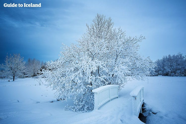 Reykjavík possède plusieurs parcs à quelques pas du centre, tels que Laugardalur, qui deviennent des oasis de paysages enneigés immaculés en hiver.