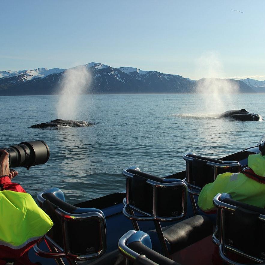 Op heldere dagen is het blazen van grote walvissen vanaf grote afstand te zien