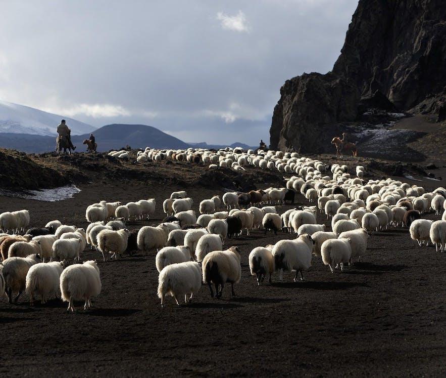 Iceland movies and documentaries worth watching (1).jpg
