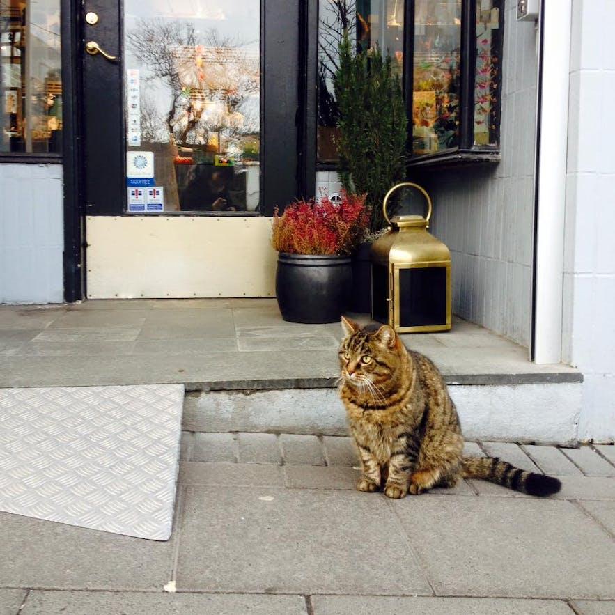 アクセサリーショップ、アウルムの前にいた猫