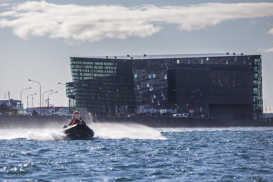 Rejs na oglądanie maskonurów z Reykjaviku.