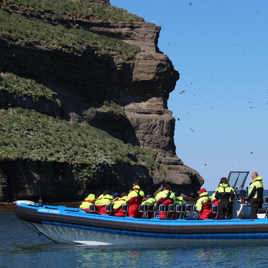 Oglądanie maskonurów z pokładu szybkiej łodzi Zodiac.