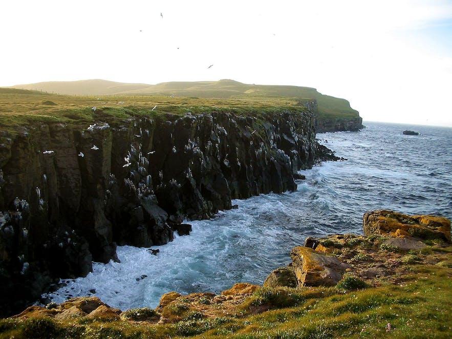 海鳥の集まる海辺の崖