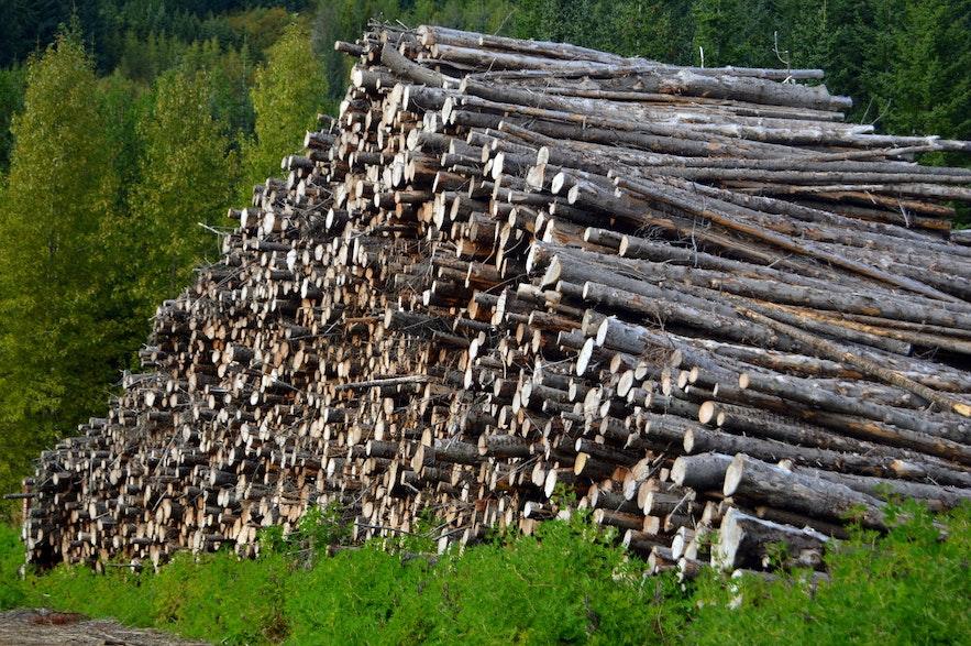 拒载,冰岛在有人登陆后,森林在百年间便被伐光