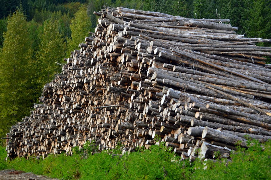 Iceland is thought to have been completely cleared of forest cover within a hundred years of settlement.