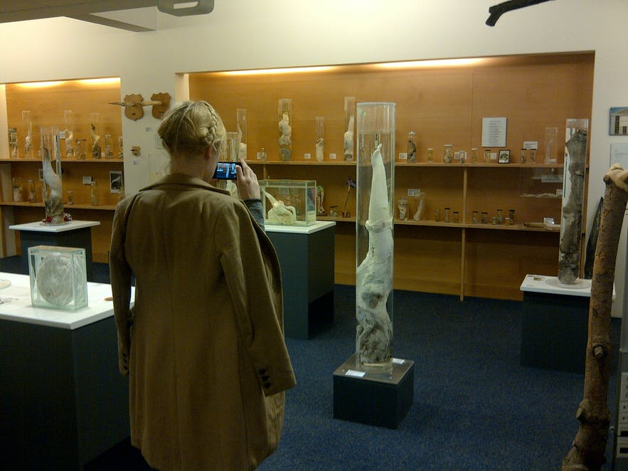 The Icelandic Phallological Museum is one of Iceland's most unique and interesting cultural exhibits.