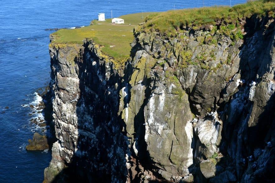 Klify Latrabjarg na islandzkich Fiordach Zachodnich