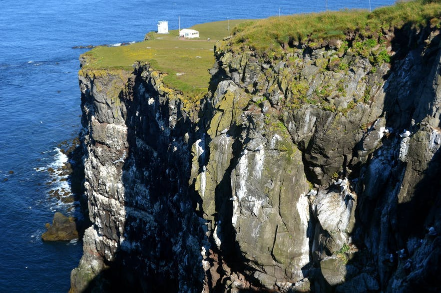 A corner of the cliffs of Látrabjarg