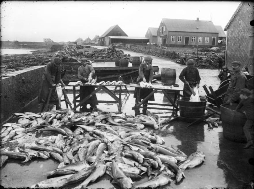Before heavy industry, fishing has for centuries served as Iceland's main export income