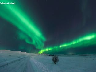 8-tägige Mietwagen-Winterreise | Nordlichter in Süd- und Westisland