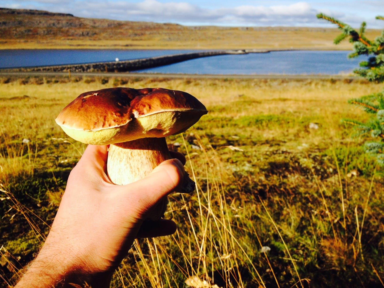 Icelandic Magic Mushrooms Got Me Into Foraging