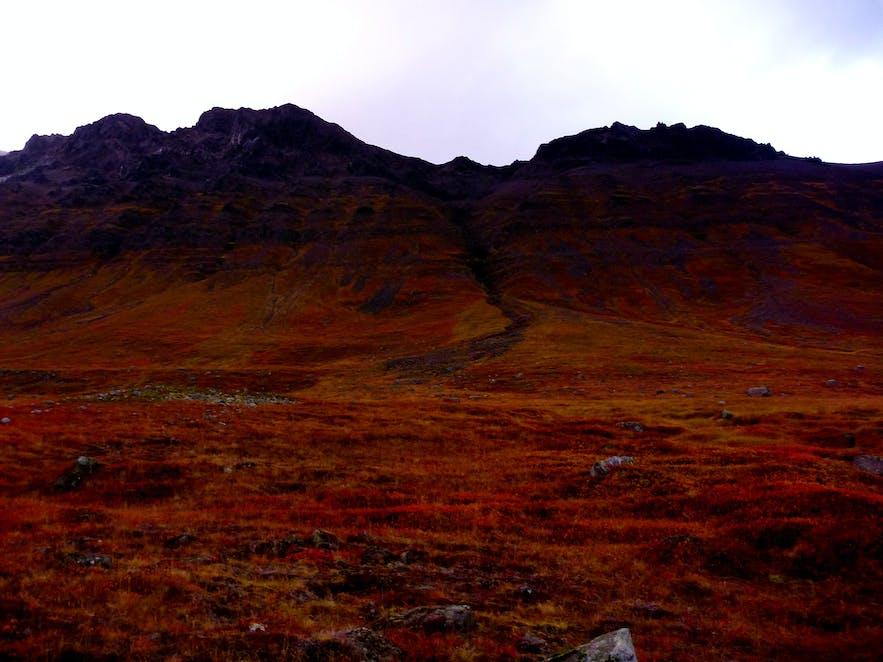 Icelandic Magic Mushrooms Got Me Into Foraging   Guide to