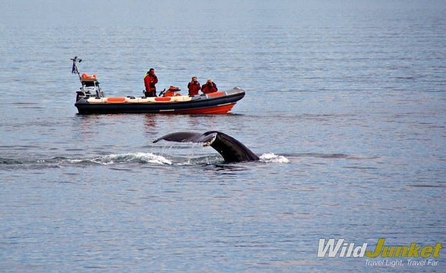 iceland family travel whale watching