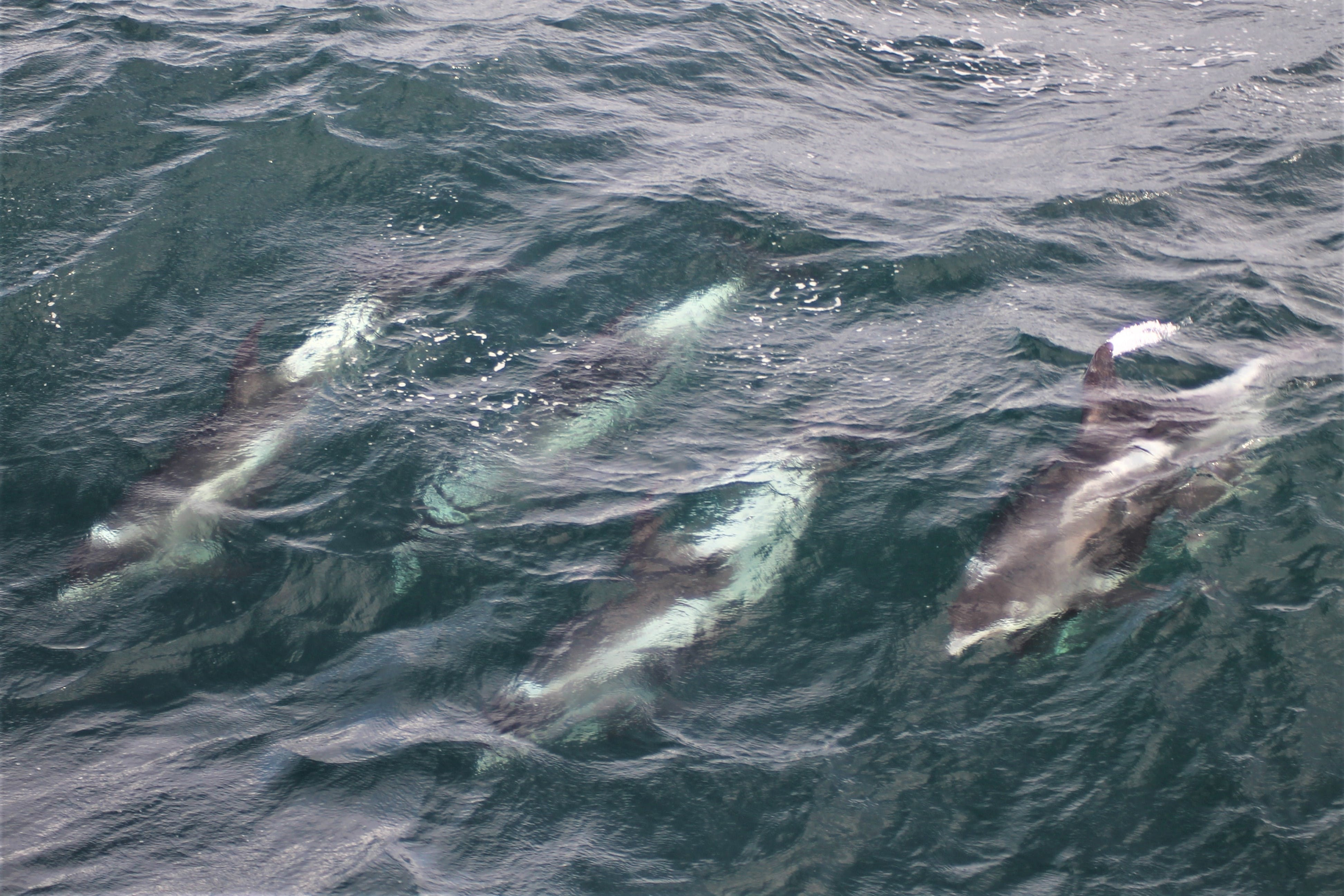 Creatures of the sea | Fishing and whale watching tour from Reykjavik