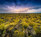 On your travels, you will see plenty of dried lava plateaus covered with a blanket of Icelandic moss.