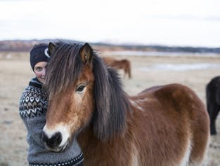 1 heure de balade à cheval vers Hveragerdi