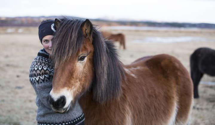Courte balade à cheval vers Hveragerdi   Non loin de Reykjavik