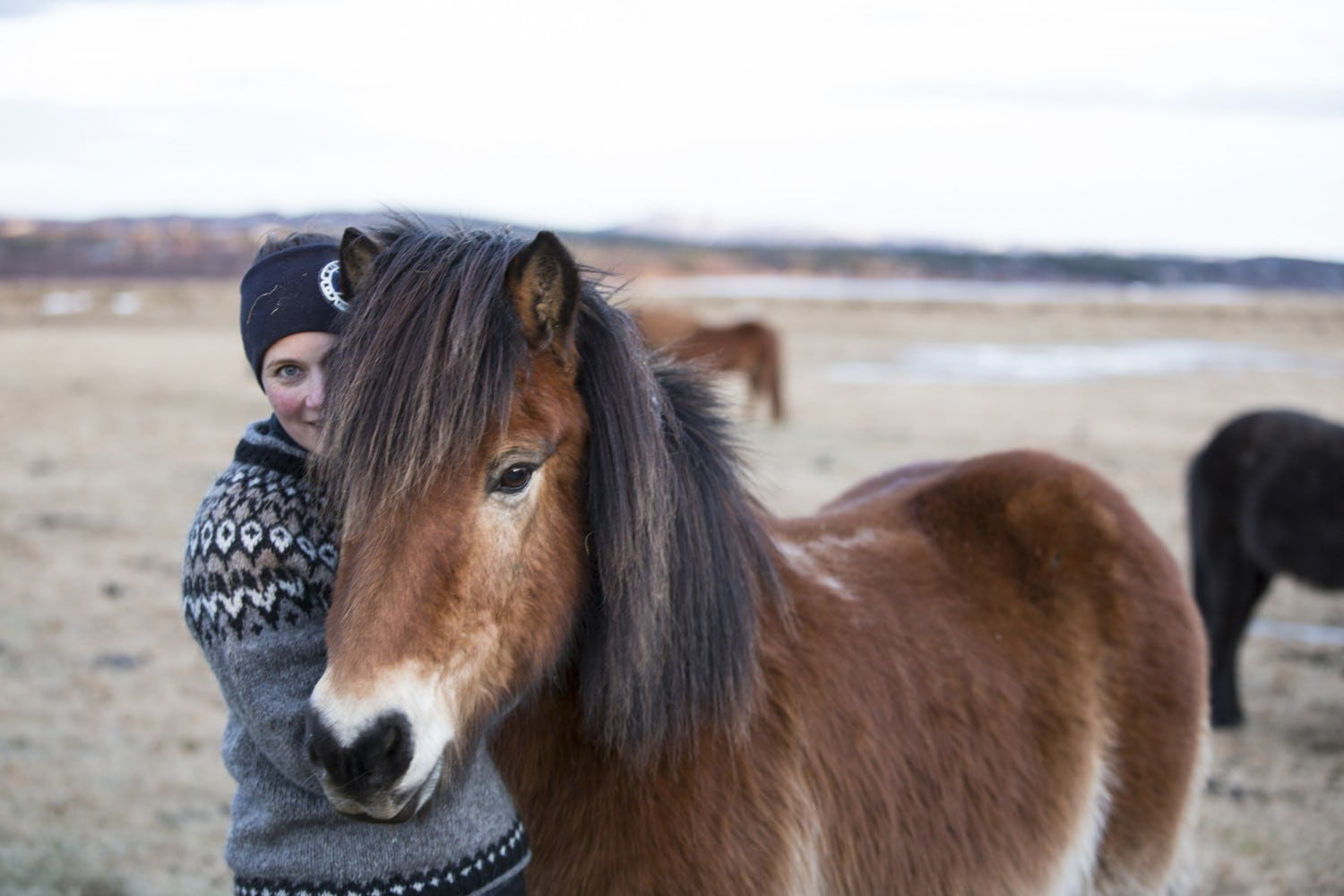 Meet the Icelandic horse, a unique breed that has been evolutionarily isolated for a millennium.