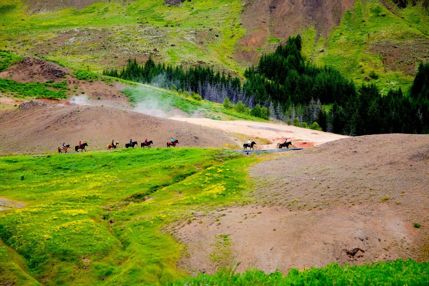 Icelandic horses travelling through Reykjadalur Valley.