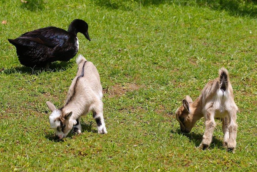 In einem Streichelzoo können deine Kinder schöne junge Tiere aus nächster Nähe kennenlernen