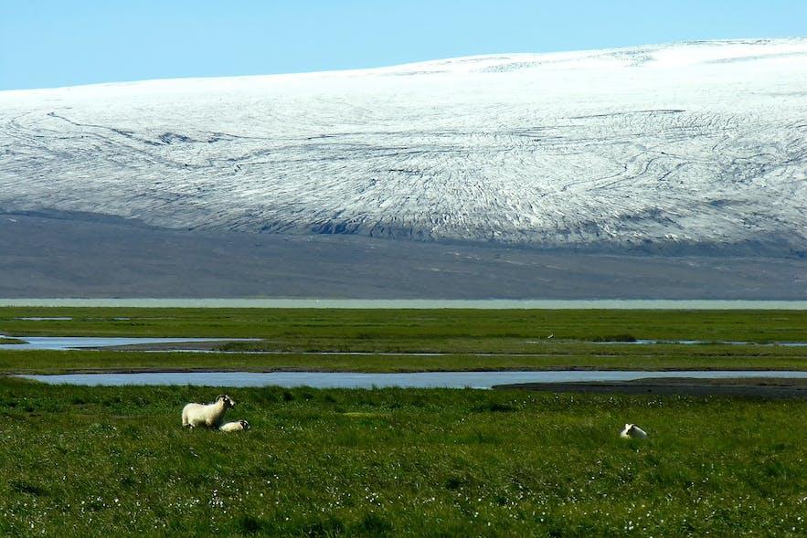 Hvítárvatn jest potężna, ale pływa w niej zaledwie kilka gór lodowych.