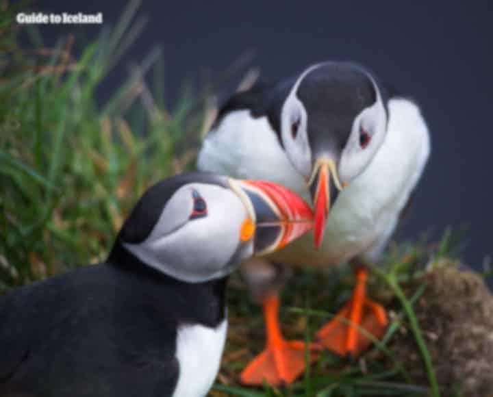 探索冰岛-搜索关于冰岛旅行-文化-自然的信息