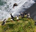 アイスランド南海岸にて、ディルホーラエイはパフィンの営巣地としても知られている