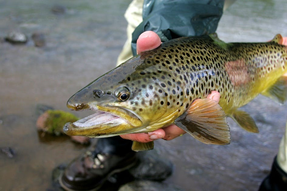 Trout Fishing Tour Iceland