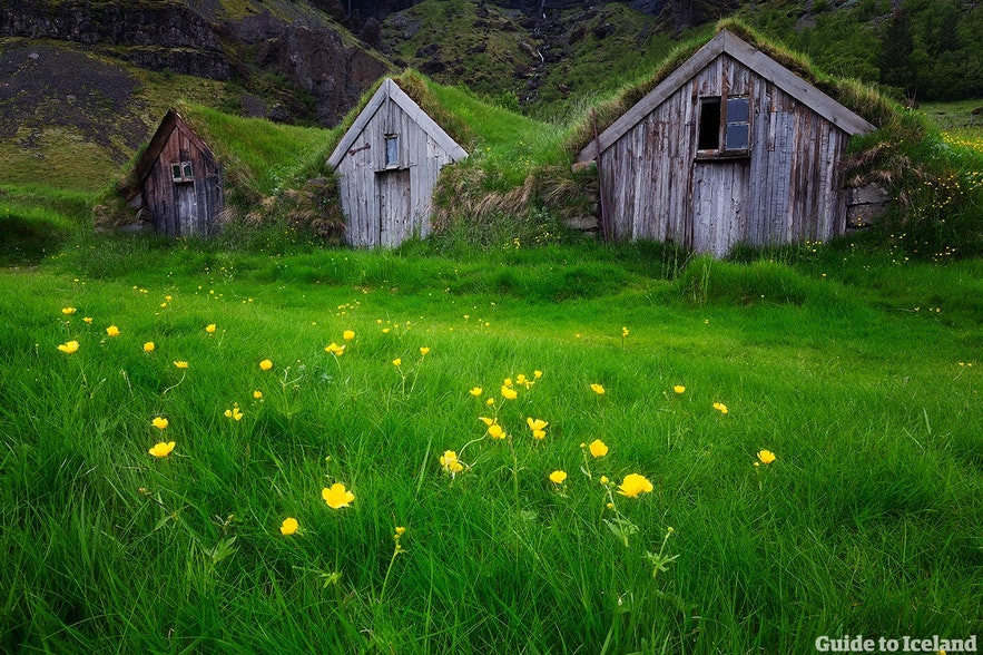 Not too long ago, most Icelanders resided in turf houses such as these