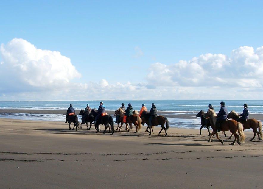 9月可以在冰岛各地参加骑马旅行团