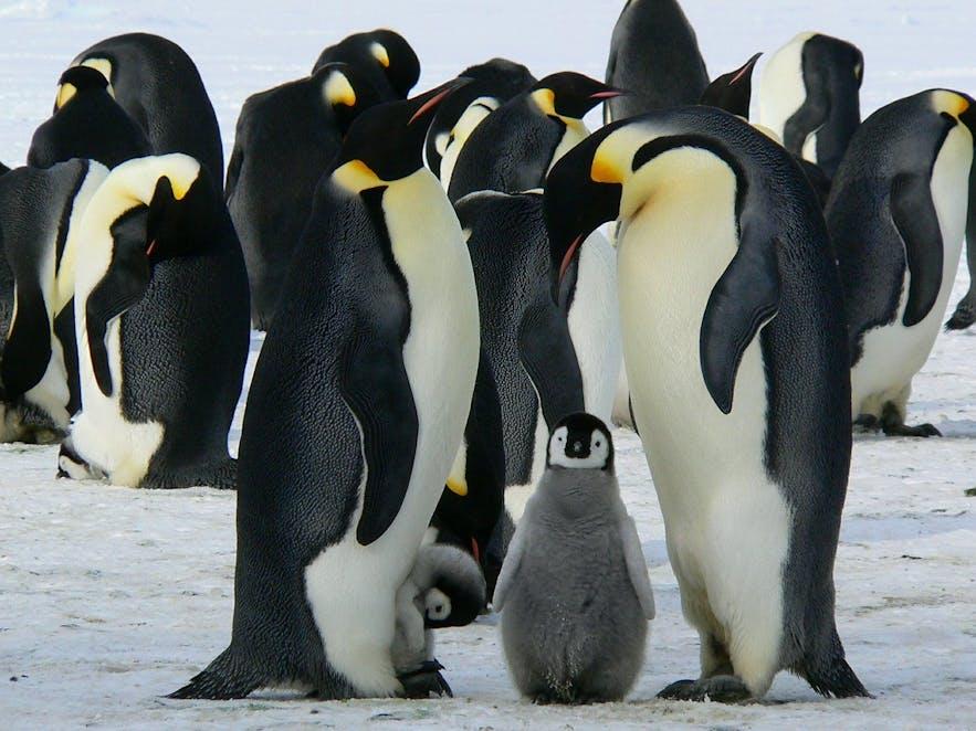 地球の反対側にいるペンギン