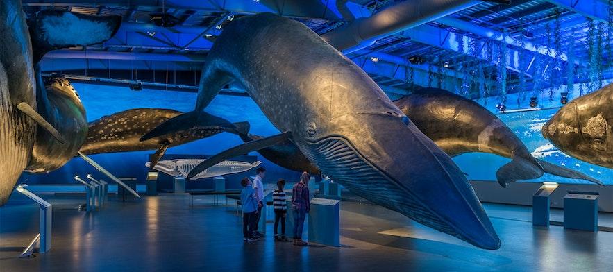 雷克雅維克鯨魚博物館