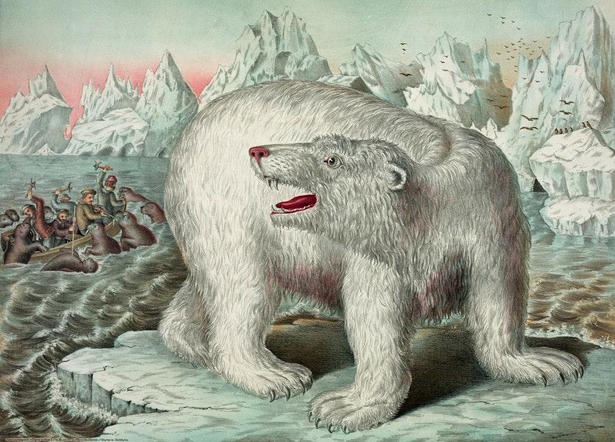 Вот, например, существует распространенный миф о том, что в Исландии живут белые медведи. На самом деле они лишь иногда заезжают в страну верхом на айсбергах.