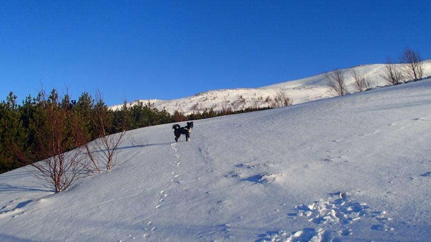 12月の晴れた日のアイスランド