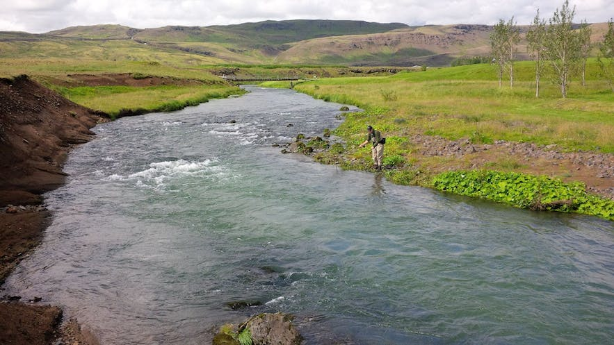 Varma is one of the best rivers in Iceland for catching sea trout.
