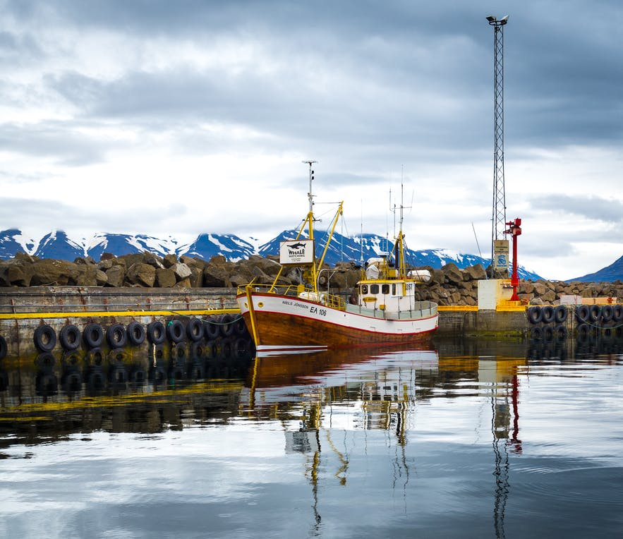 Hauganes is one of the prime whale watching locations in Iceland