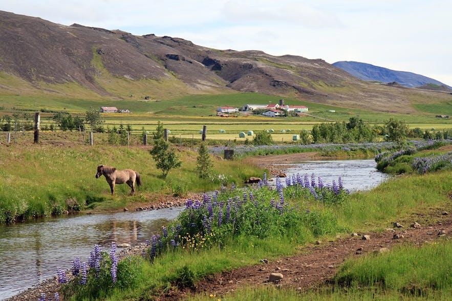 冰岛大雷克雅未克首都地区的Mosfellsdalur山谷,通往辛格维利尔国家公园