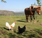 ATVツアーで行く山の周りには馬などの家畜も