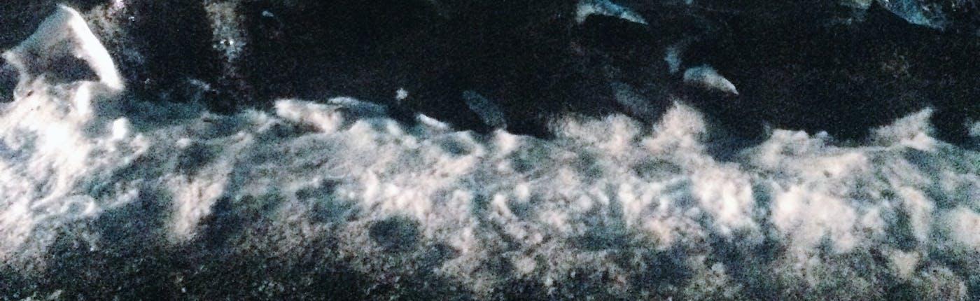 Besuch einer Eishöhle in Süd-Island