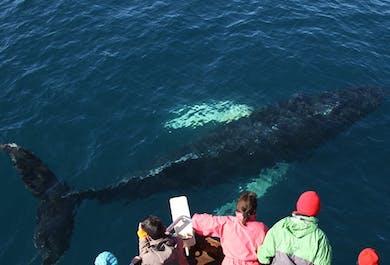 Whale Watching-Tour | ab Húsavík