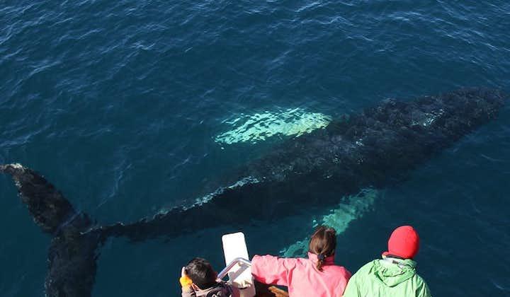 Whale Watching-Tour   ab Húsavík