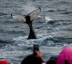 The tail flukes of a mighty Humpback Whale off the coast of Reykjavík.