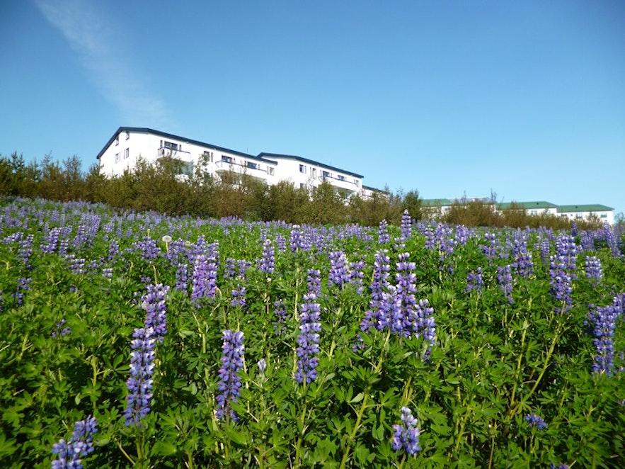 Périphérie de Reykjavík © Cédric H. Roserens